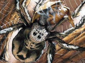 Ragno gigante (tela e preda)