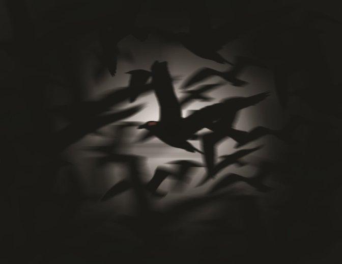 corvi notturni