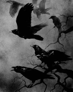 raven black corvi neri